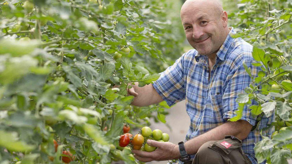 Unternehmensporträt Biohof, Fotos aus der Arbeitswelt: Tomaten reifen | Foto: Dieter Eikenberg, imprints