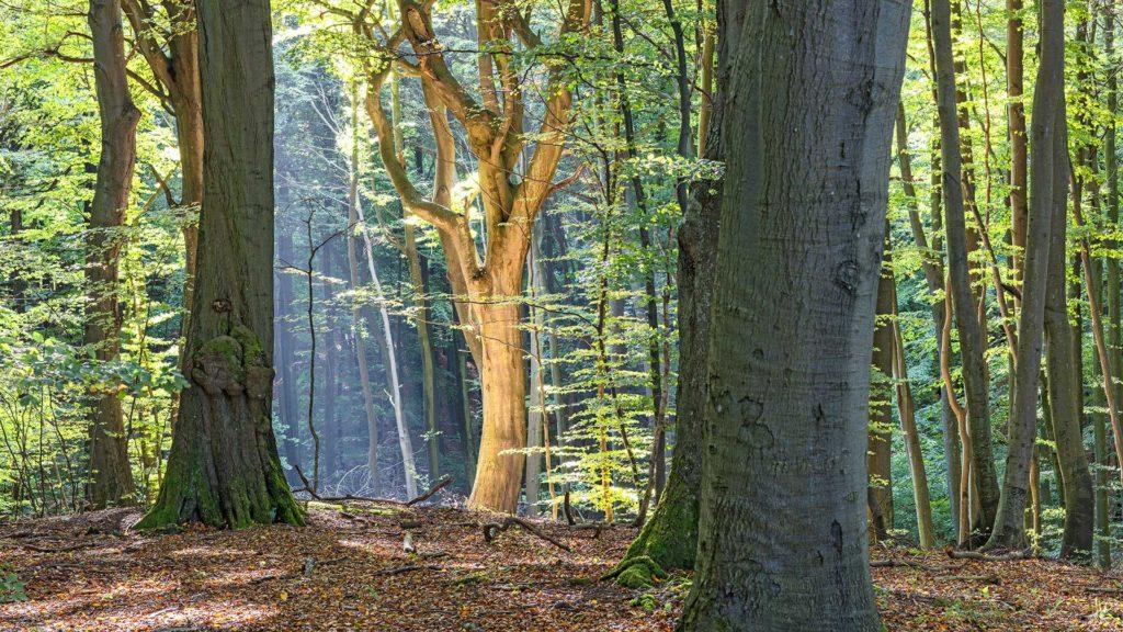 Landschaftsfotografie: Rügen, Lichteinfall im Wald nahe Königsstuhl | Foto: Dieter Eikenberg, imprints
