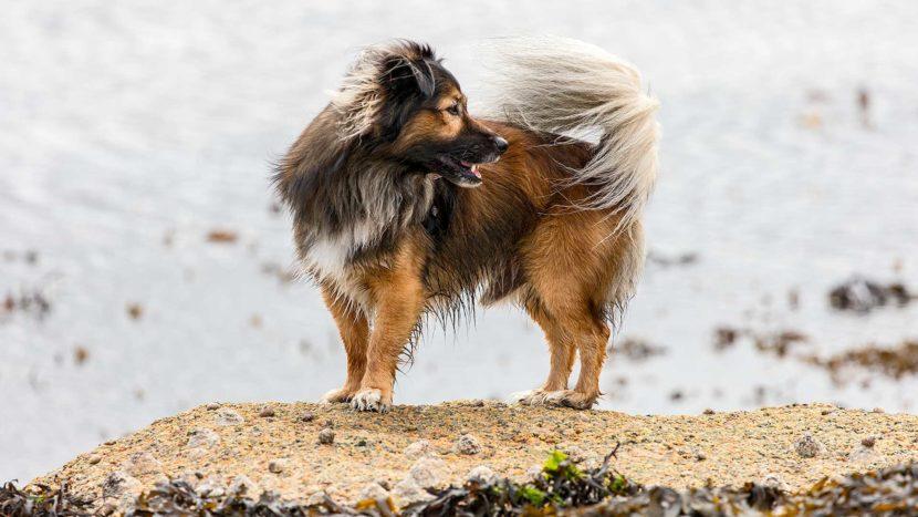 "Naturfotografie, Tierfotografie: Côte de Granit Rose – Hund ""Kuba"" in der Bretagne | Foto: Dieter Eikenberg, imprints"
