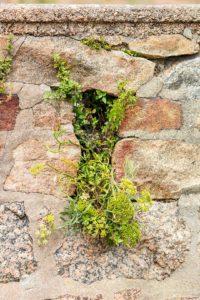 Landschaftsfotografie: Côte de Granit Rose – Kleine Welten | Foto: Dieter Eikenberg, imprints