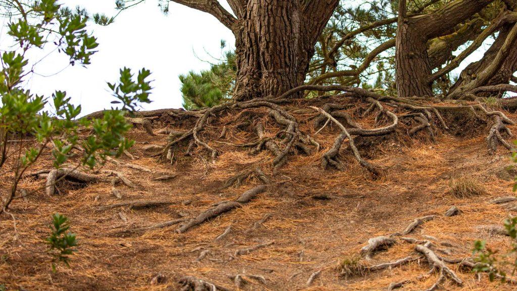Landschaftsfotografie: Côte de Granit Rose – Wurzelwerk | Foto: Dieter Eikenberg, imprints
