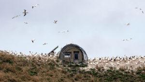 Naturfotografie, Tierfotografie: Les Sept Iles – Ile de Rouzic | Foto: Dieter Eikenberg, imprints