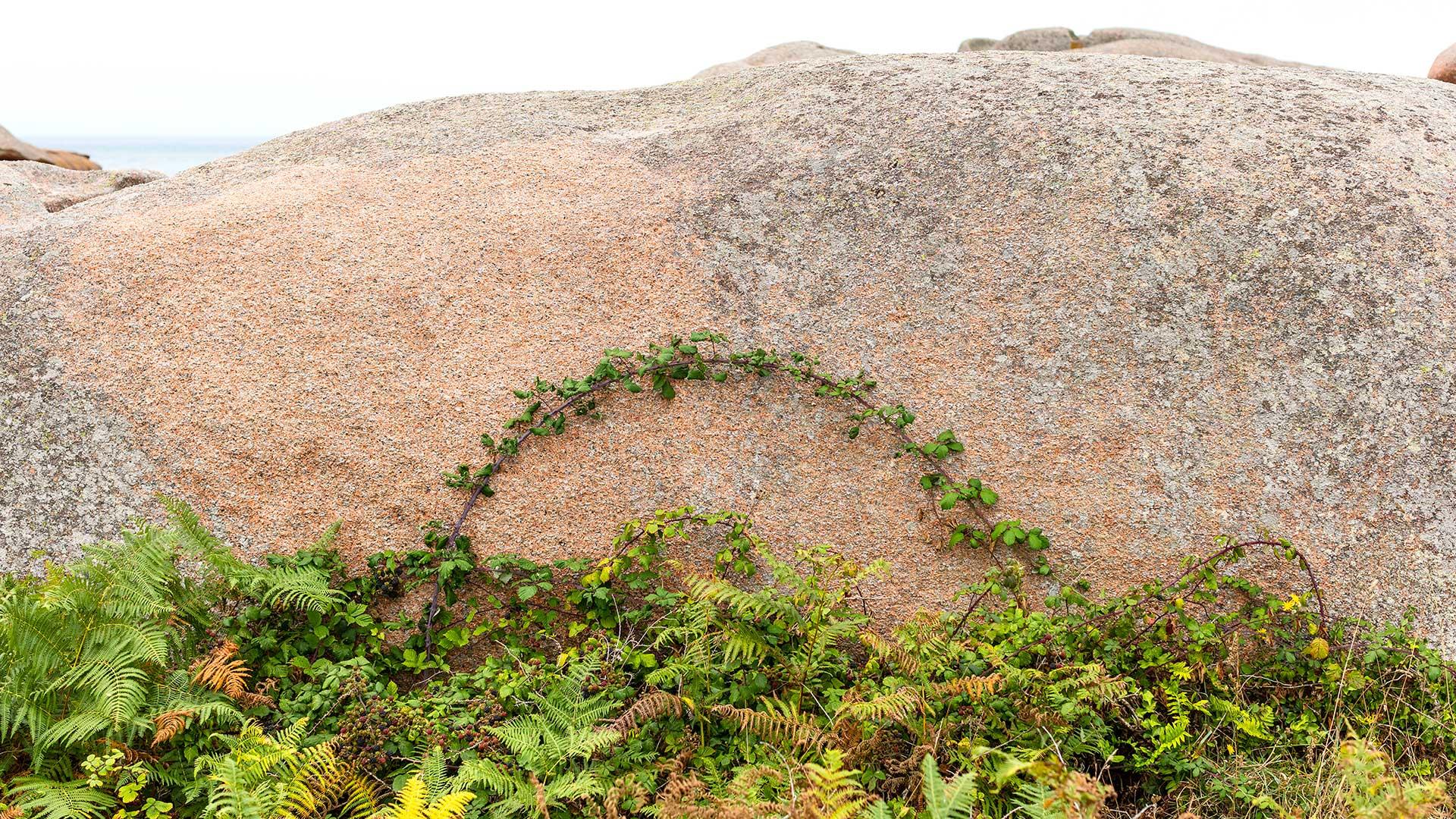 Landschaftsfotografie: Côte de Granit Rose – Grüner Bogen auf Rosa | Foto: Dieter Eikenberg, imprints