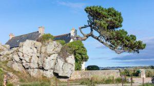 Landschaftsfotografie: Bretagne – windgeformter Baum | Foto: Dieter Eikenberg, imprints