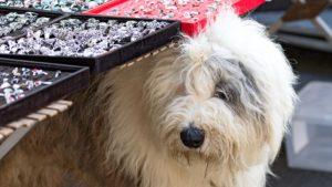Regionalporträt: Bretagne Märkte – Bretonischer Hund | Foto: Dieter Eikenberg, imprints