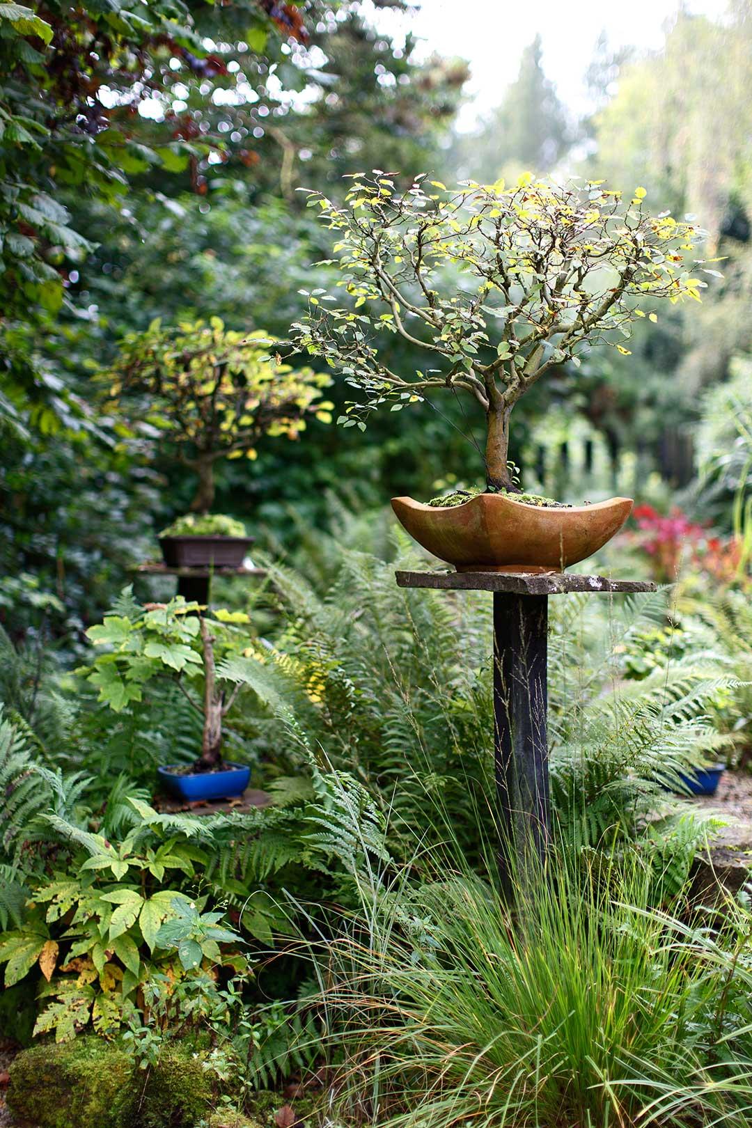 Architekturfotografie: Bonsai im Garten | Foto: Dieter Eikenberg, imprints