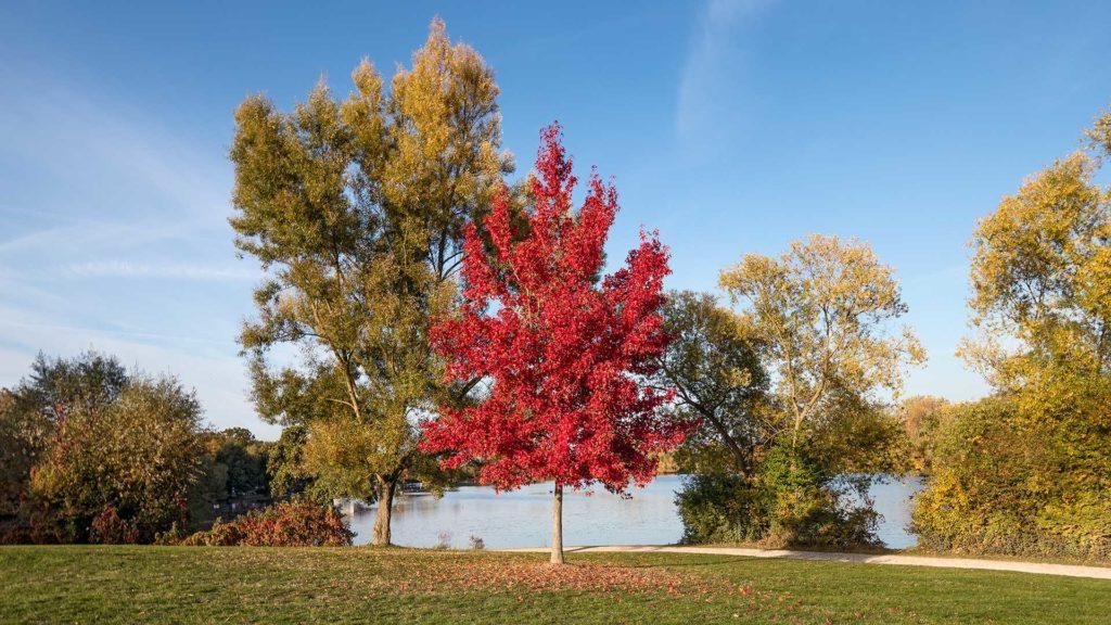 Landschaftsfotografie, Naturfotografie: Herbst am Göttinger Kiessee | Foto: Dieter Eikenberg, imprints
