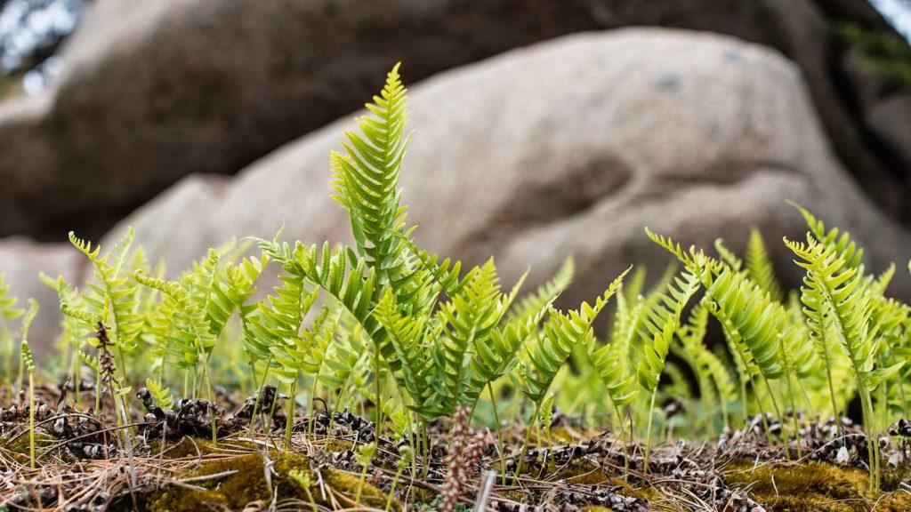 Landschaftsfotografie: Mini-Farne, Bretagne | Foto: Dieter Eikenberg, imprints