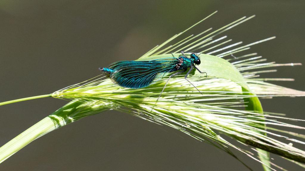 Landschaftsfotografie: Libelle | Foto: Dieter Eikenberg, imprints