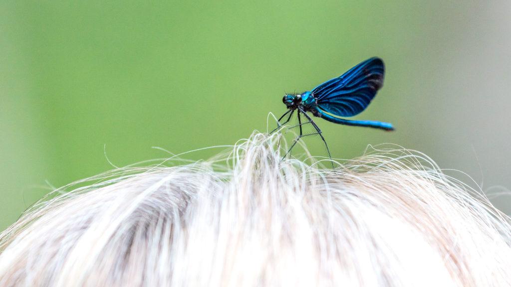 Tierfotografie: Libelle auf Kopf | Foto: Dieter Eikenberg, imprints
