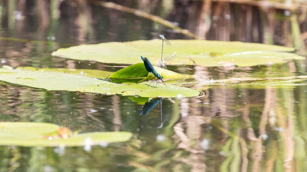 Landschaftsfotografie: Spreewald, Libellen | Foto: Dieter Eikenberg, imprints