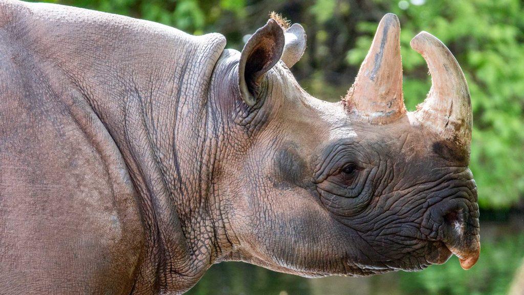 Tierfotografie: Nashorn | Foto: Dieter Eikenberg, imprints