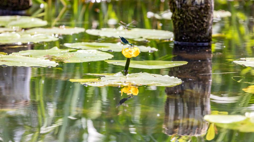Landschaftsfotografie: Spreewald, Libelle | Foto: Dieter Eikenberg, imprints