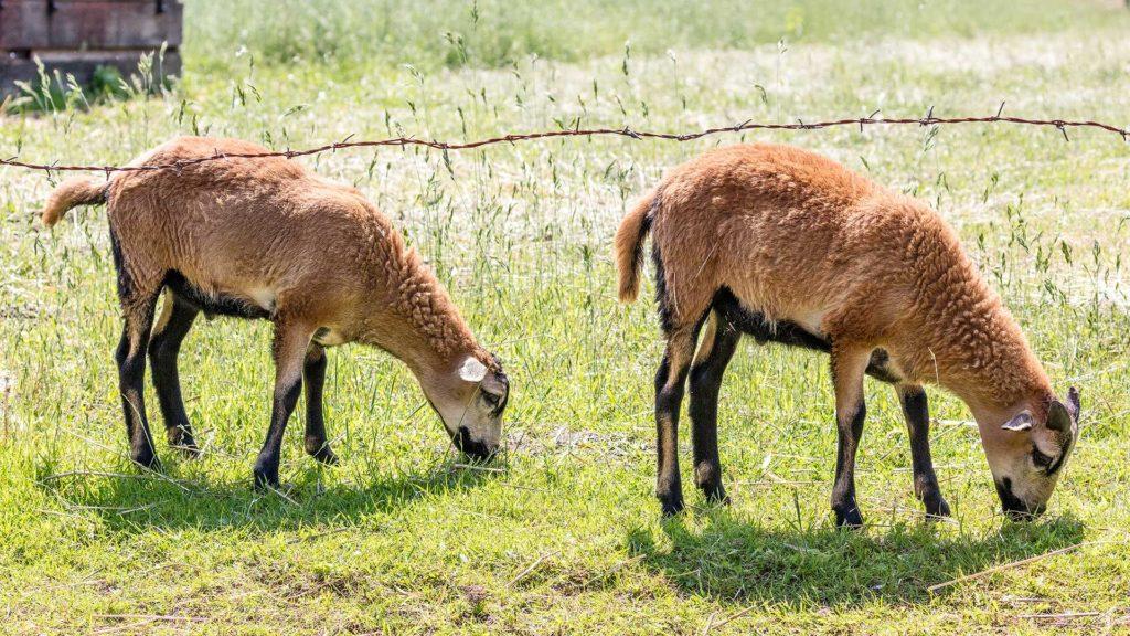 Landschaftsfotografie: Tiere im Spreewald | Foto: Dieter Eikenberg, imprints