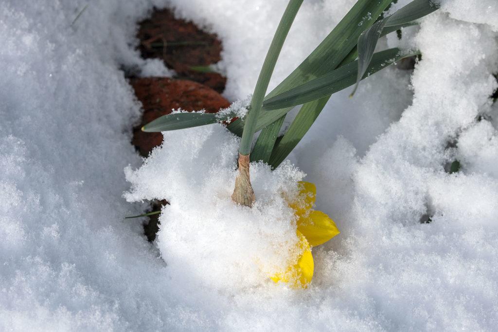 Ostern im Schnee