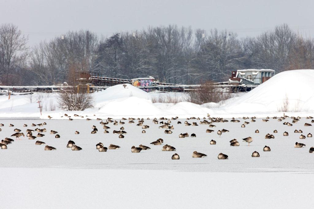 Winter rund um Rosdorf