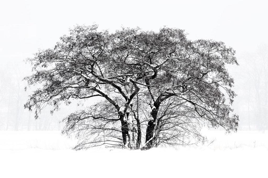 Baum vor Schneelandschaft