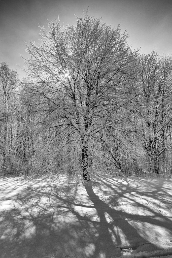 Baum im Schnee, Rosdorf