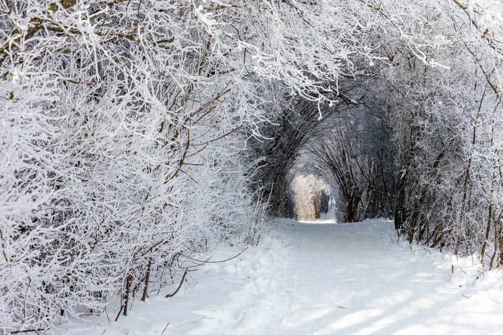 Winterlicher Tunnel in Rosdorf