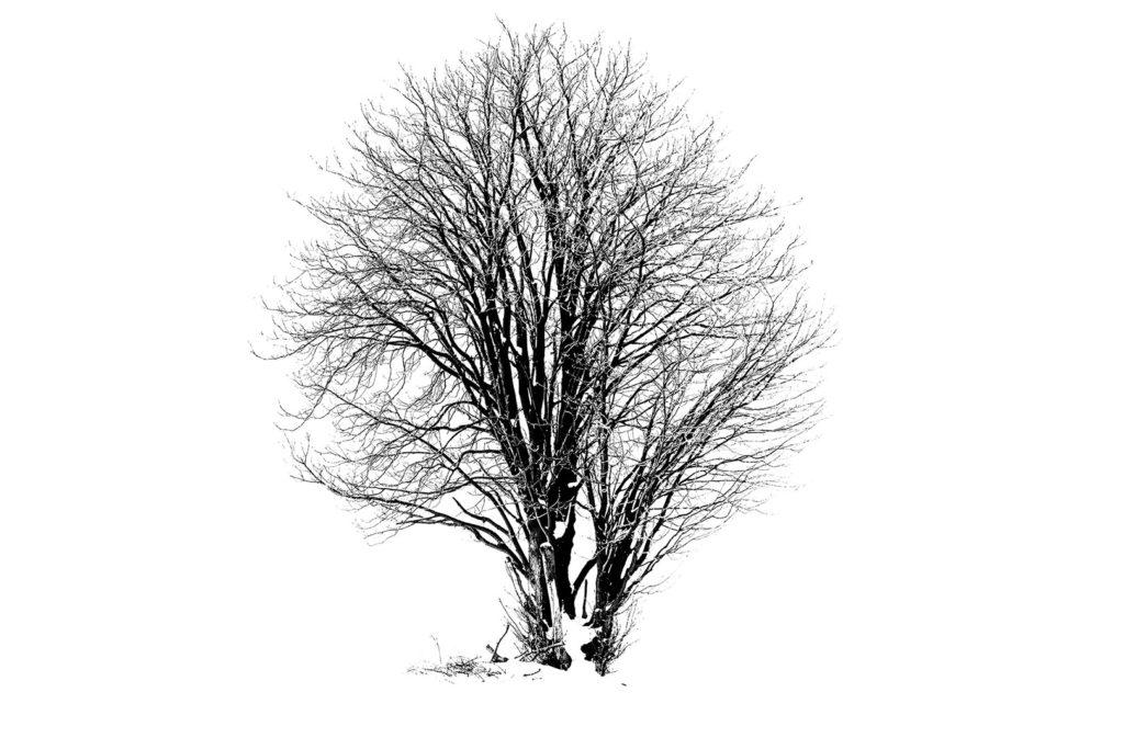 Baum vor Schneelandschaft, Rosdorf